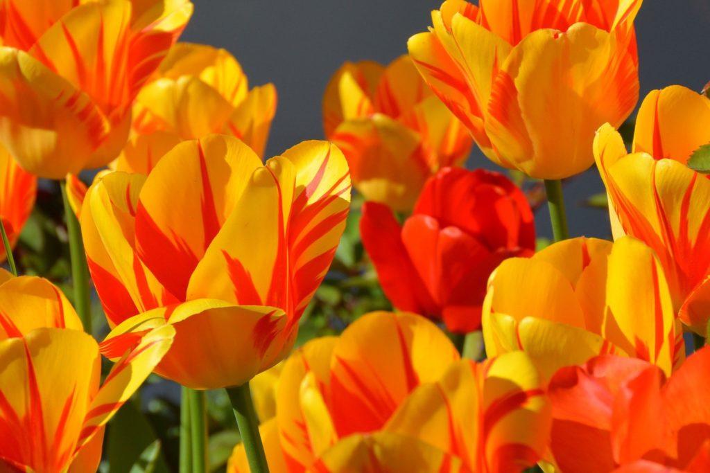 Wiosna w ogrodzie, czyli co robić w marcu?